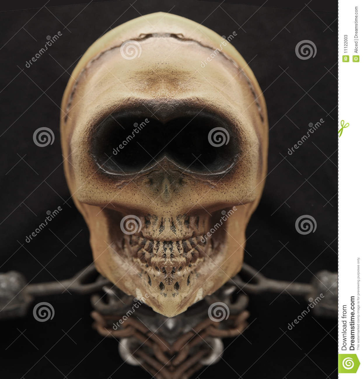 Grinning Skull Stock Photos - Image: 11122003: http://dreamstime.com/stock-photos-grinning-skull-image11122003