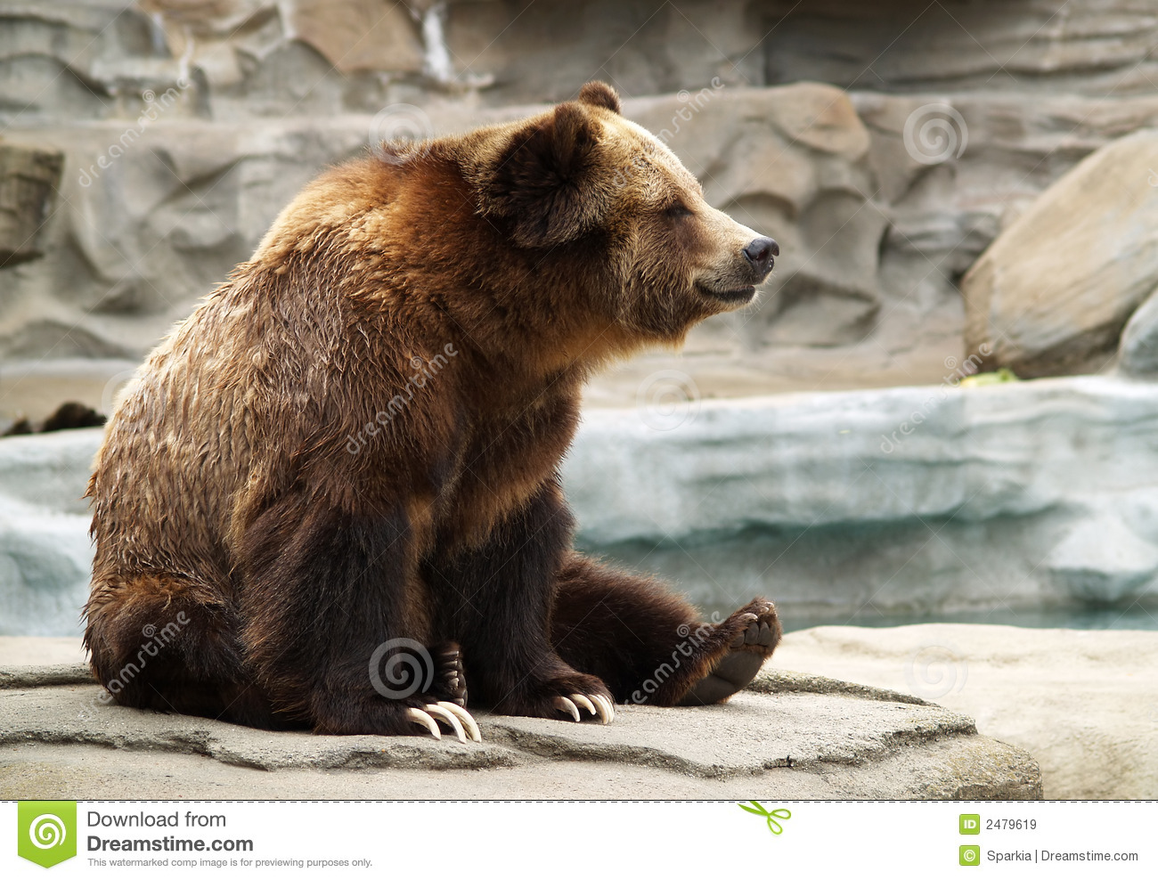 Grizzly bear sitting up - photo#12