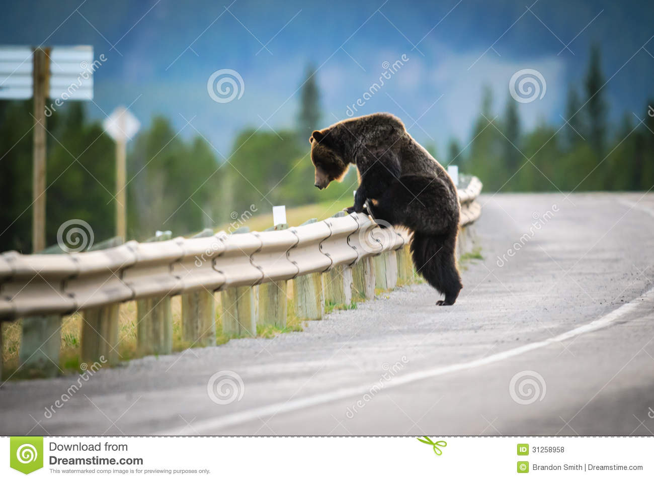 Grizzly Bear (Ursus Arctos Horribilis) Royalty Free Stock Photos ...