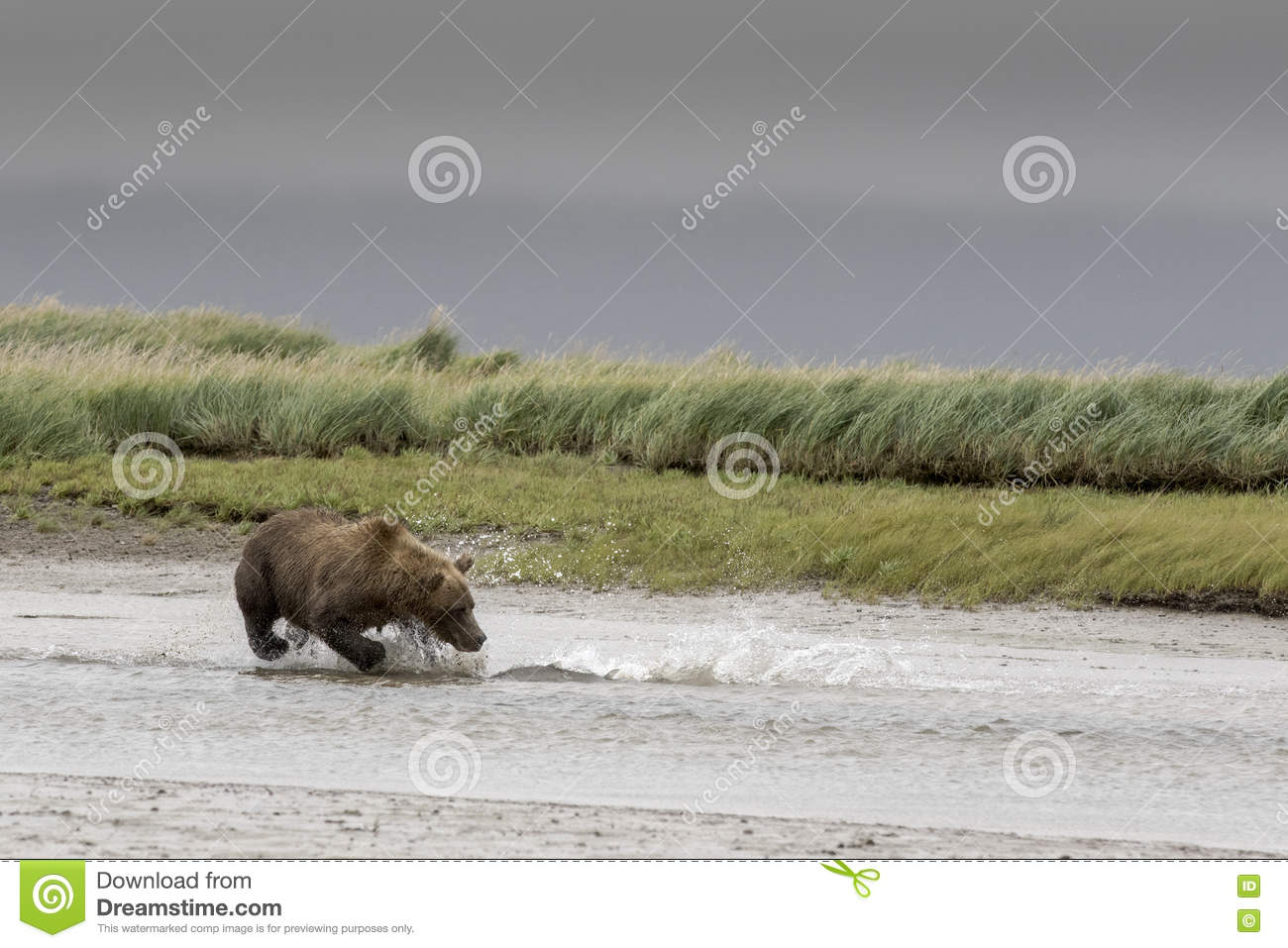 Grizzly and big Salmon.