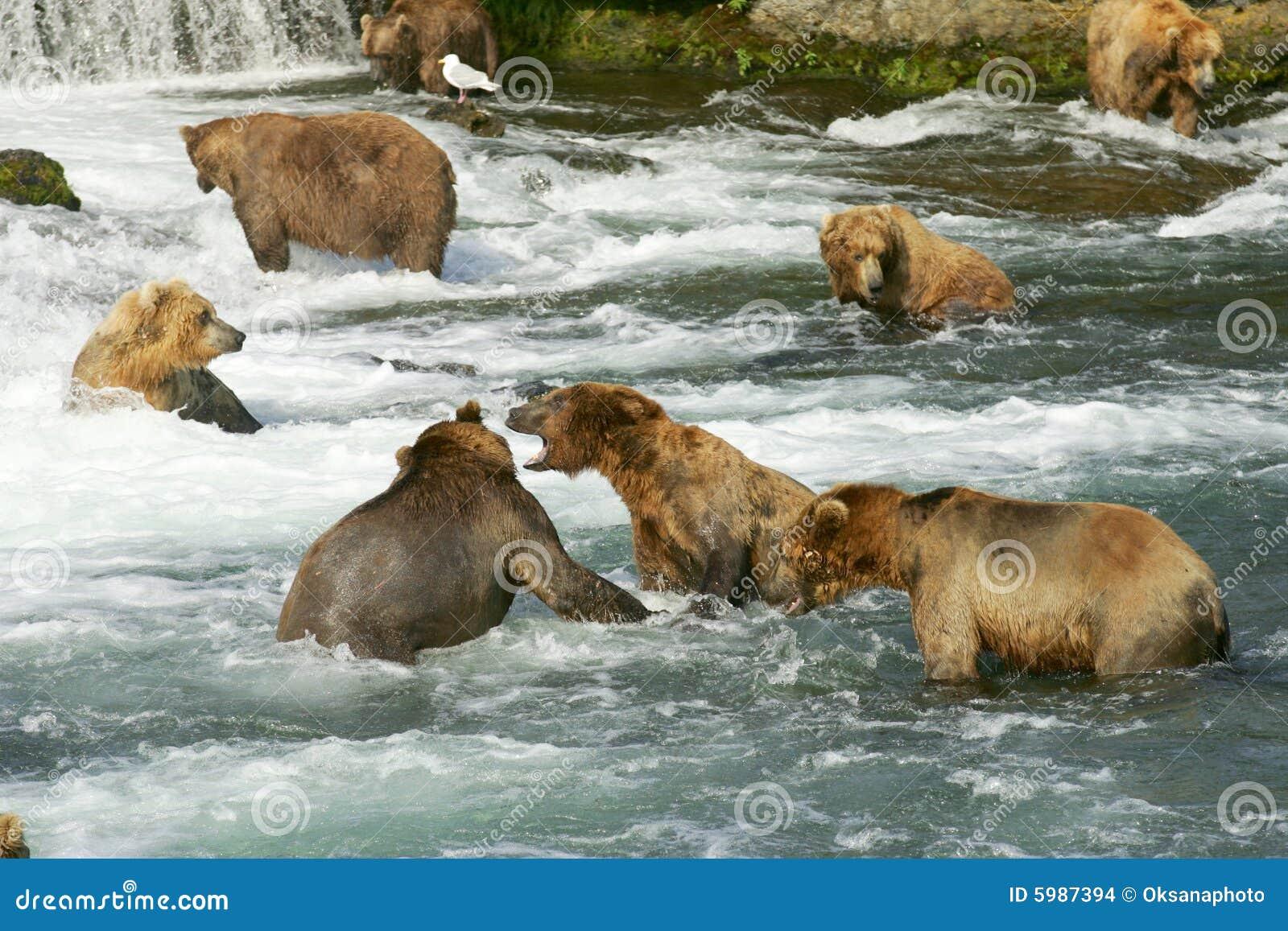 Grizzly ponosi