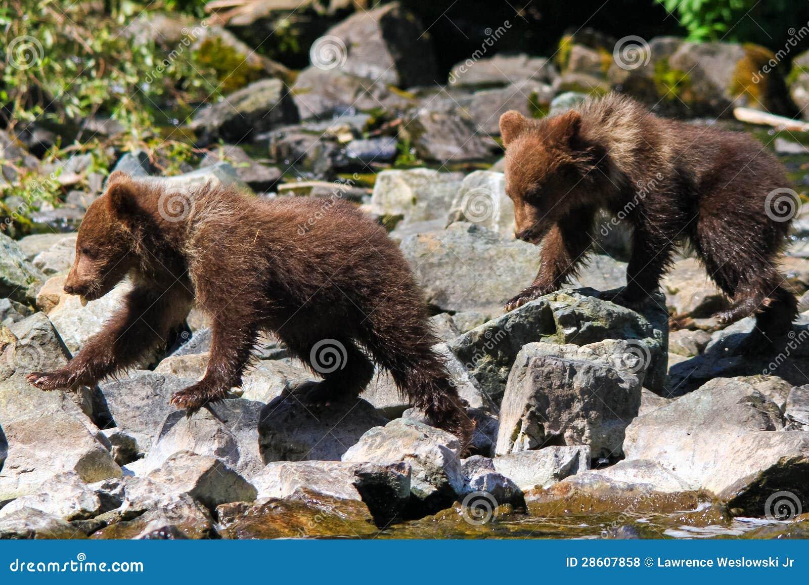 Grizzlybär-CUB-Zwillinge Alaskas Brown