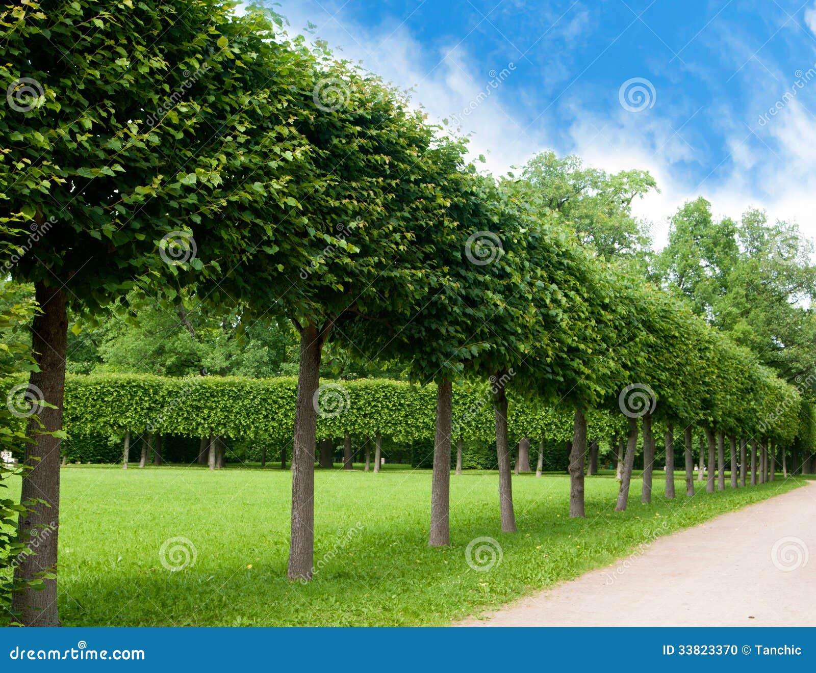 Gränd Av Gröna Träd Klippt Fyrkantig Form Arkivfoto Bild 33823370