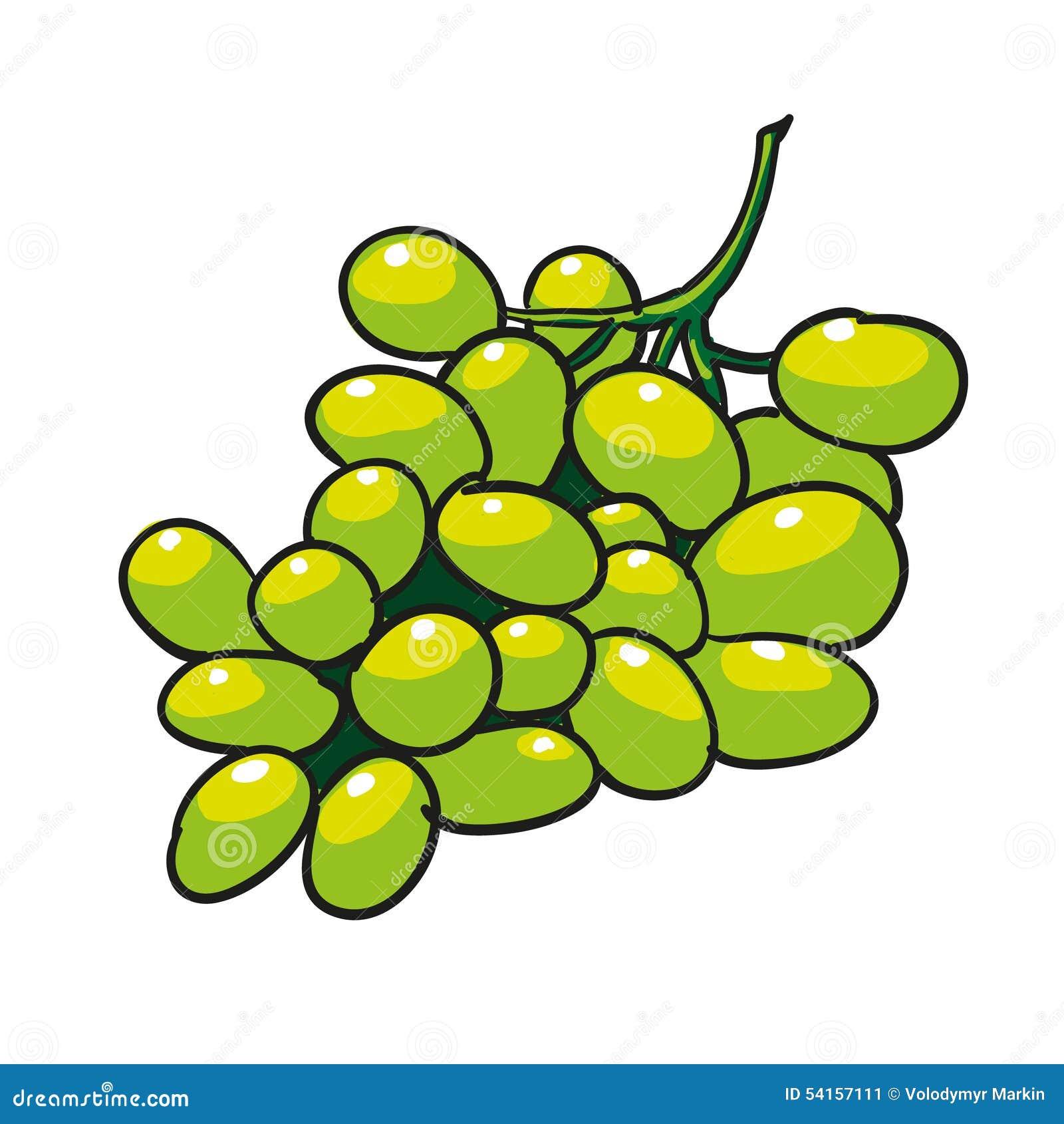 grüne gezeichnete früchte der trauben hand lokalisiert