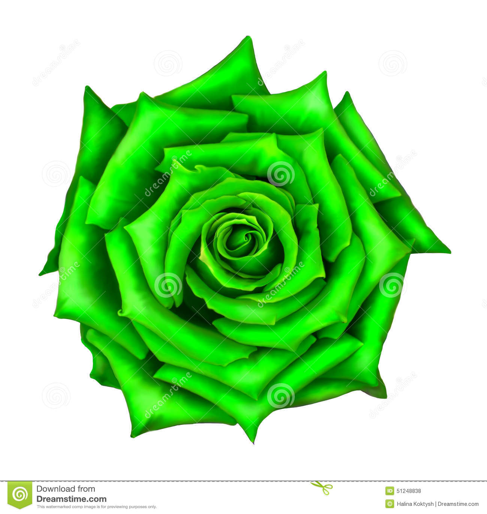 gr ne rose flower lokalisiert auf wei stockfoto bild 51248838. Black Bedroom Furniture Sets. Home Design Ideas