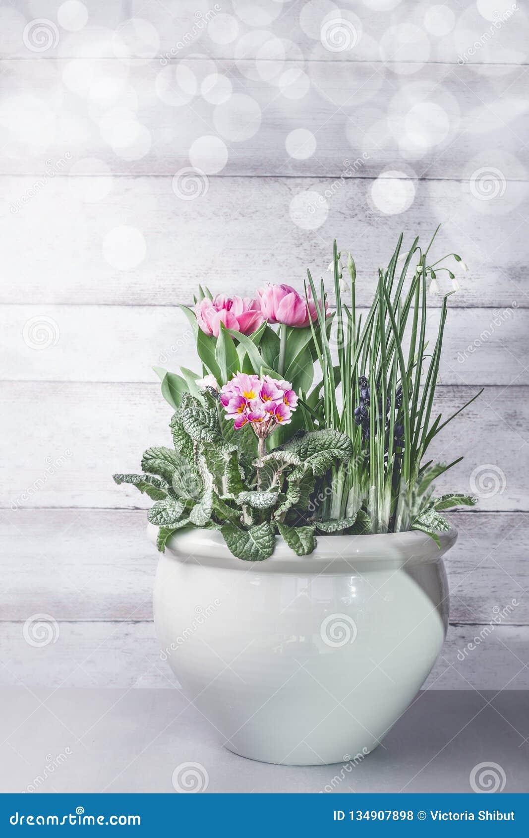 Großartige Frühlingsblumen mischen die Behältergartenarbeit Birnenblumenpflanzer auf Tabelle am weißen hölzernen Wandhintergrund