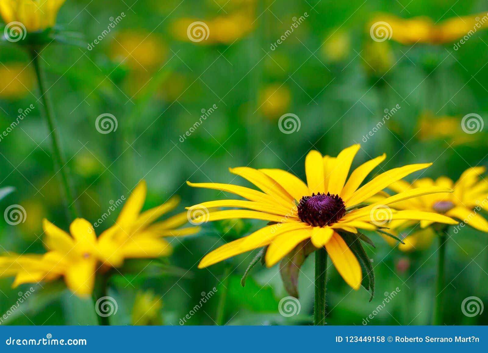 Großartige und schöne Blumen im botanischen Garten von GijÃ-³ n am 1. August 2018