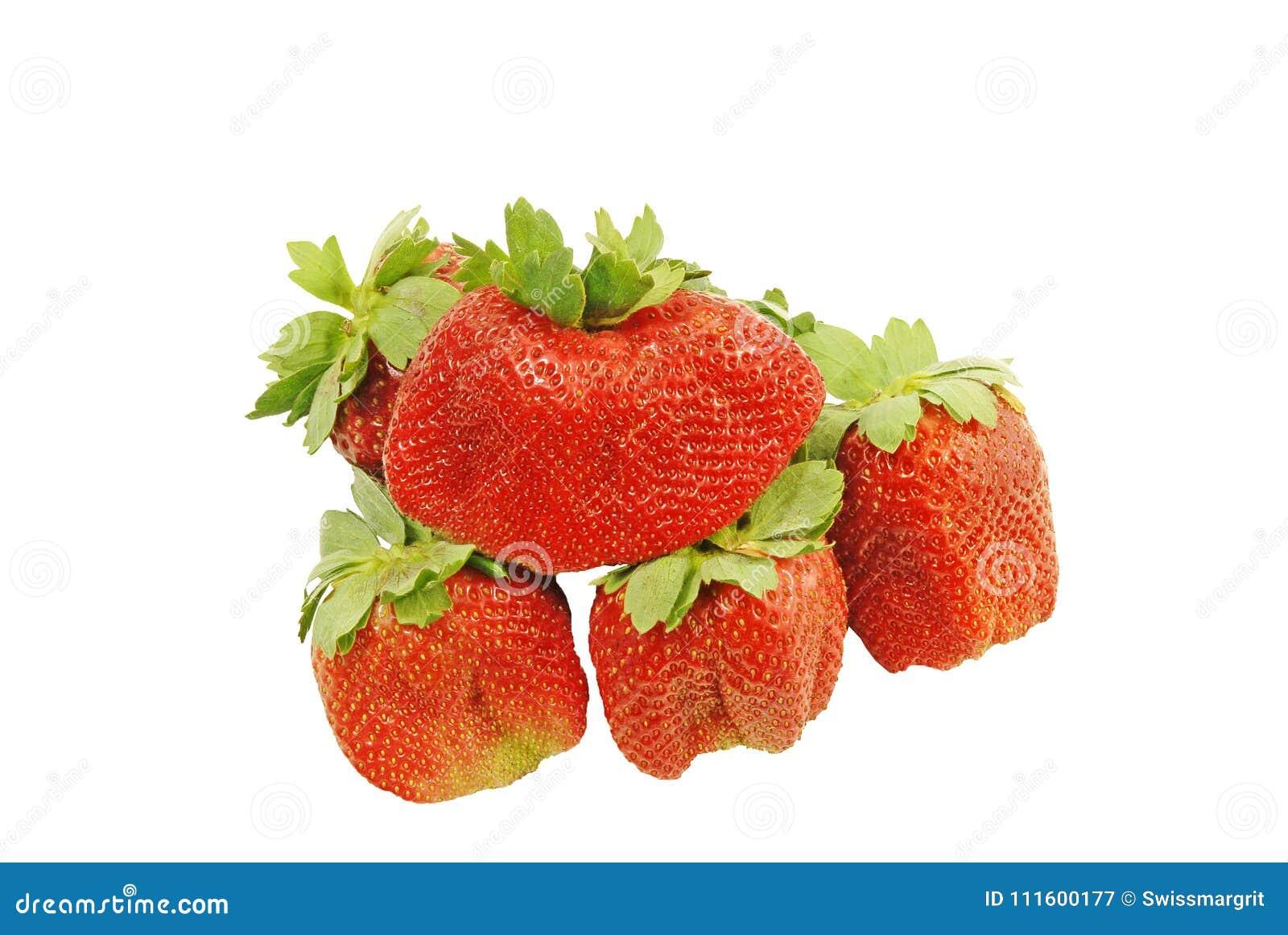Große süße saftige aromatische Erdbeeren bereit gegessen zu werden