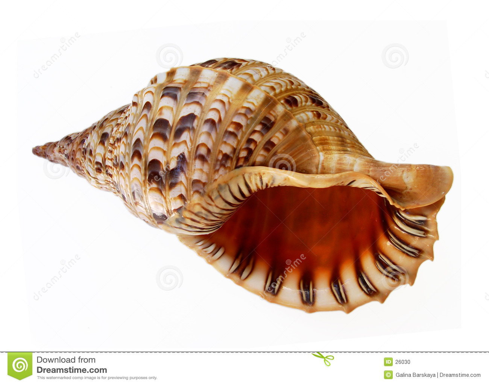 Große Seashellunterhaltung