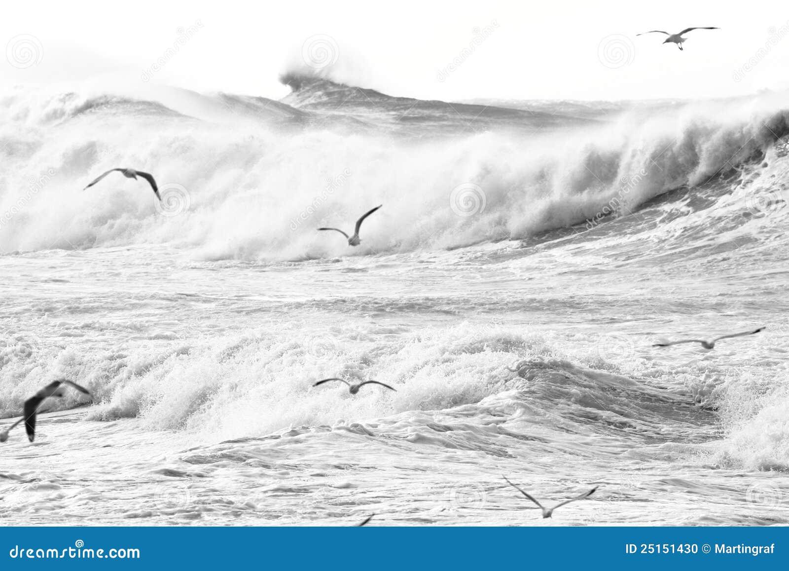 Große Wellen und Vögel