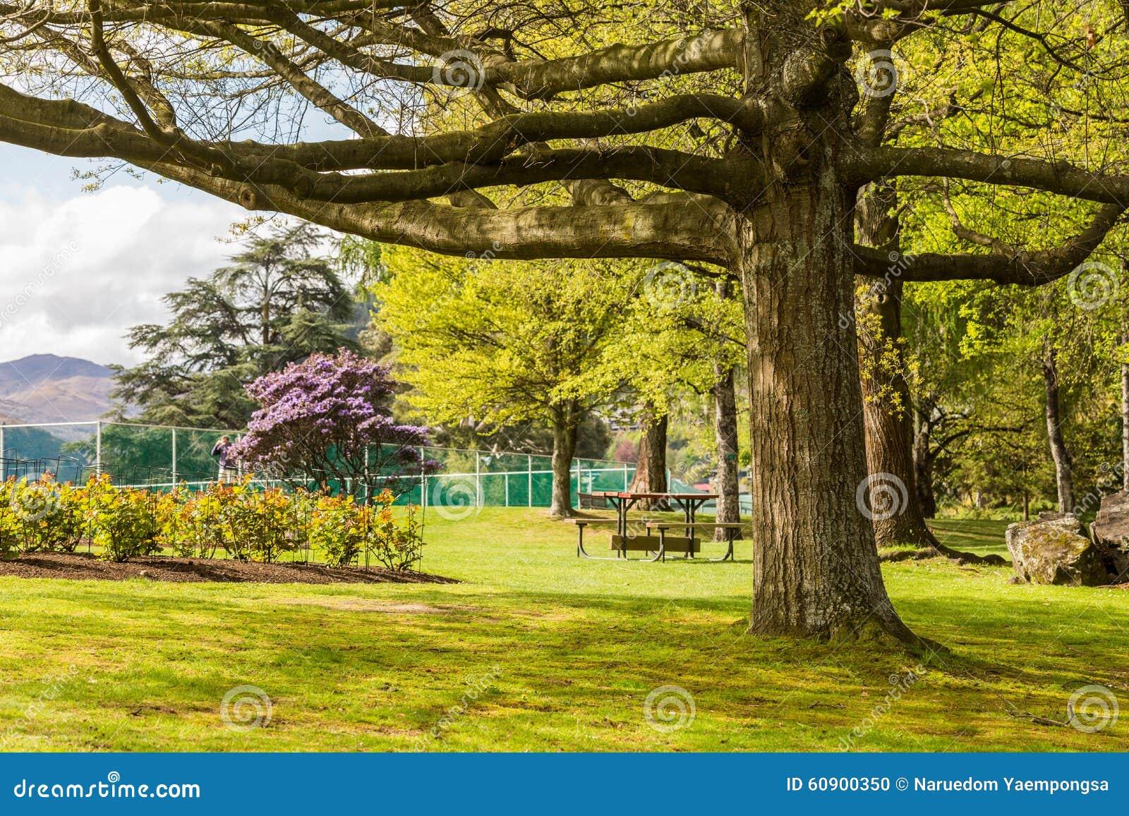 Großer Baum im Garten stockfoto Bild von picknick kabel