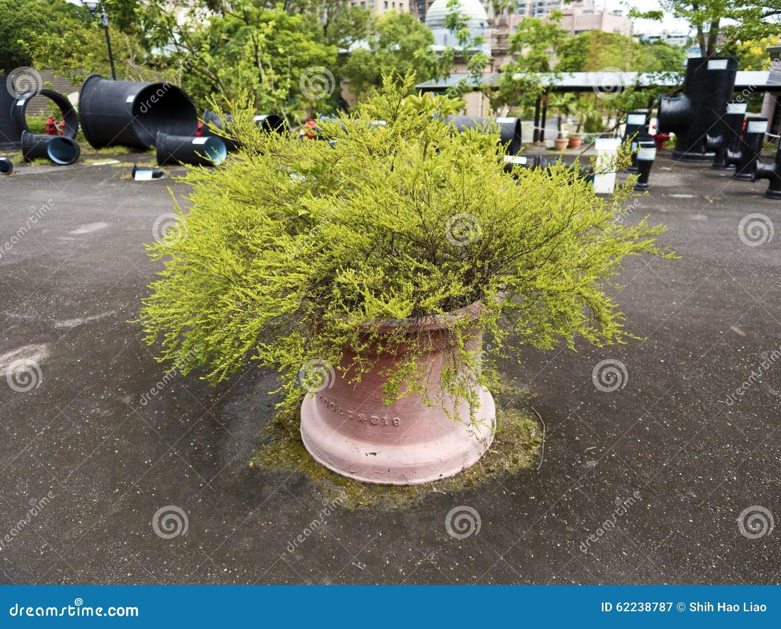 großer blumentopf auf dem boden stockbild - bild von flowerpot