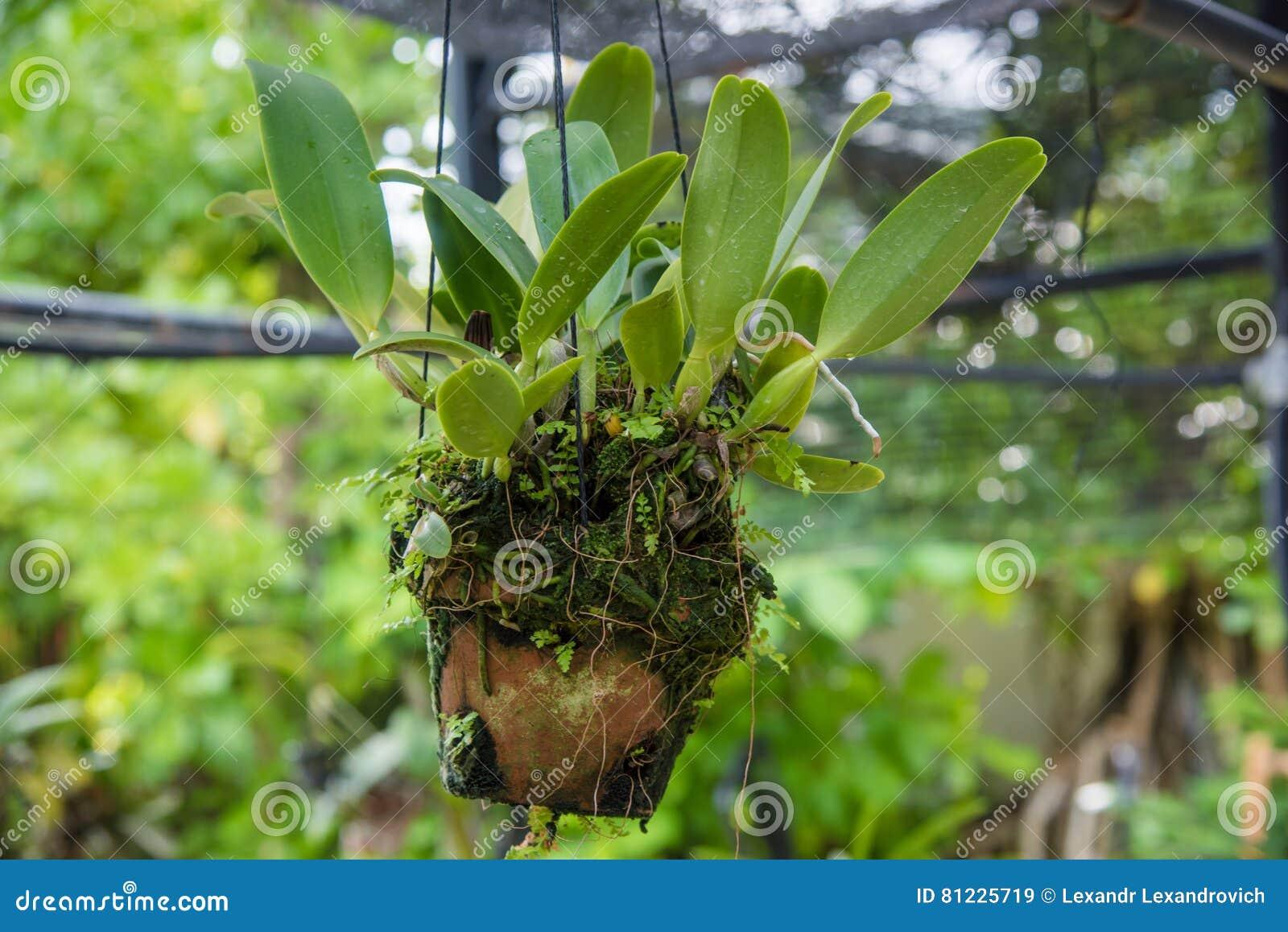 großer blumentopf hängt stockbild. bild von floret, züchter - 81225719