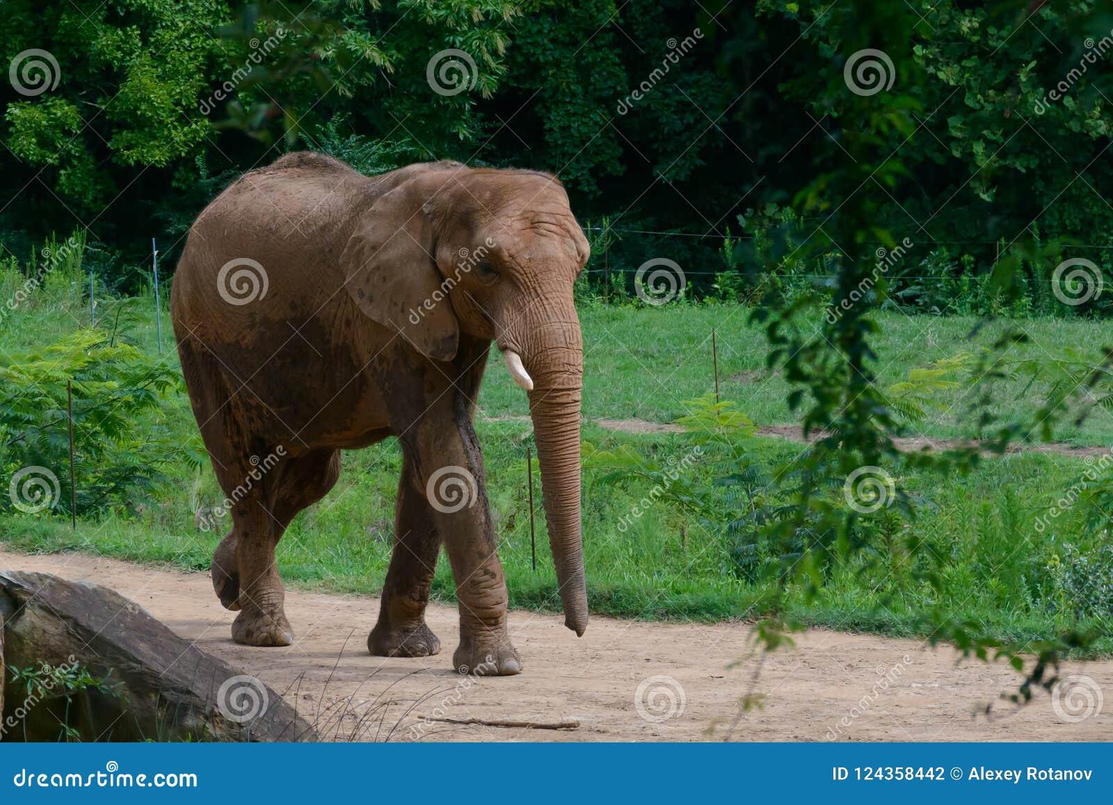 Großer Elefant im Waldhintergrund