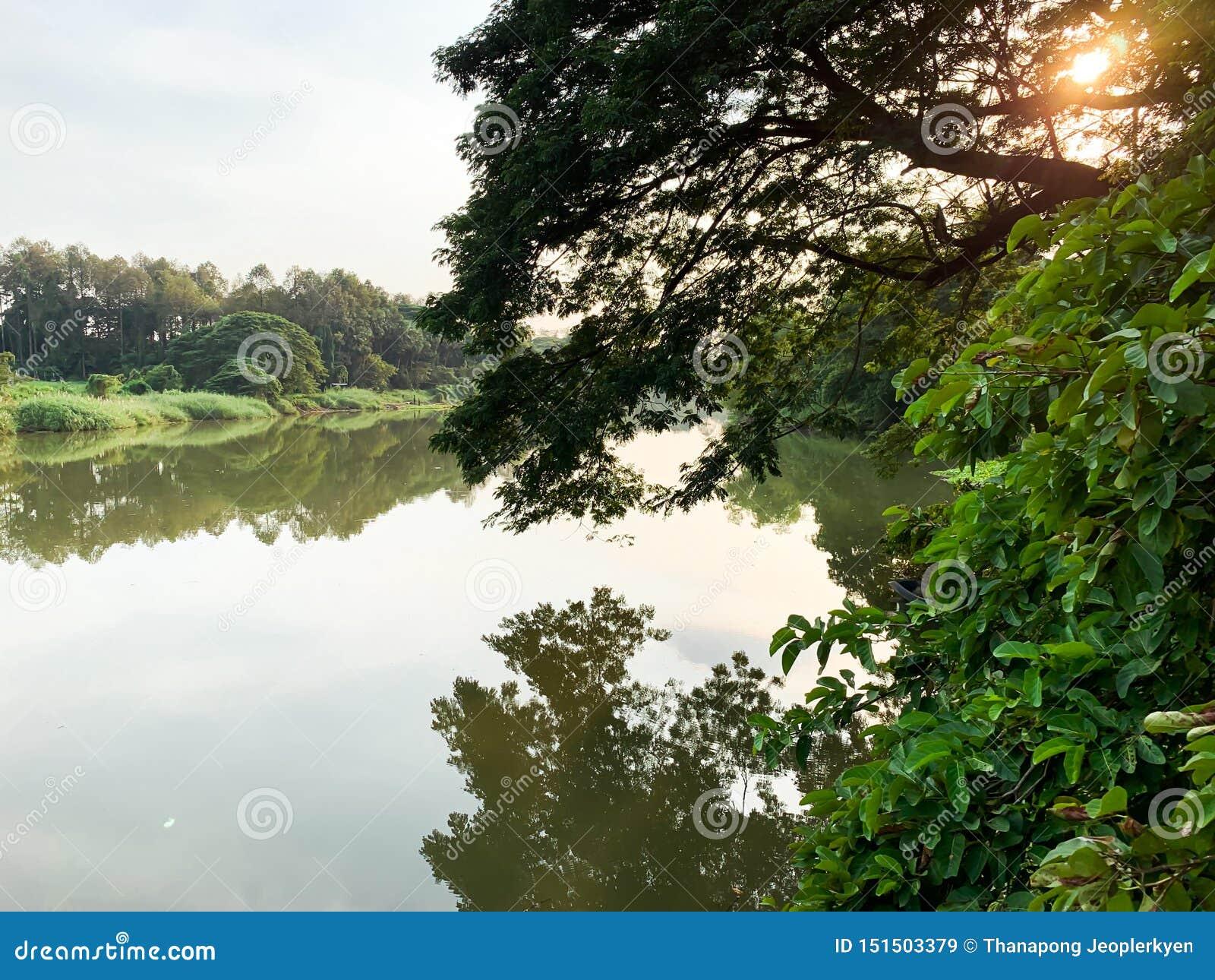 Großer Fluss- und Baumhintergrund