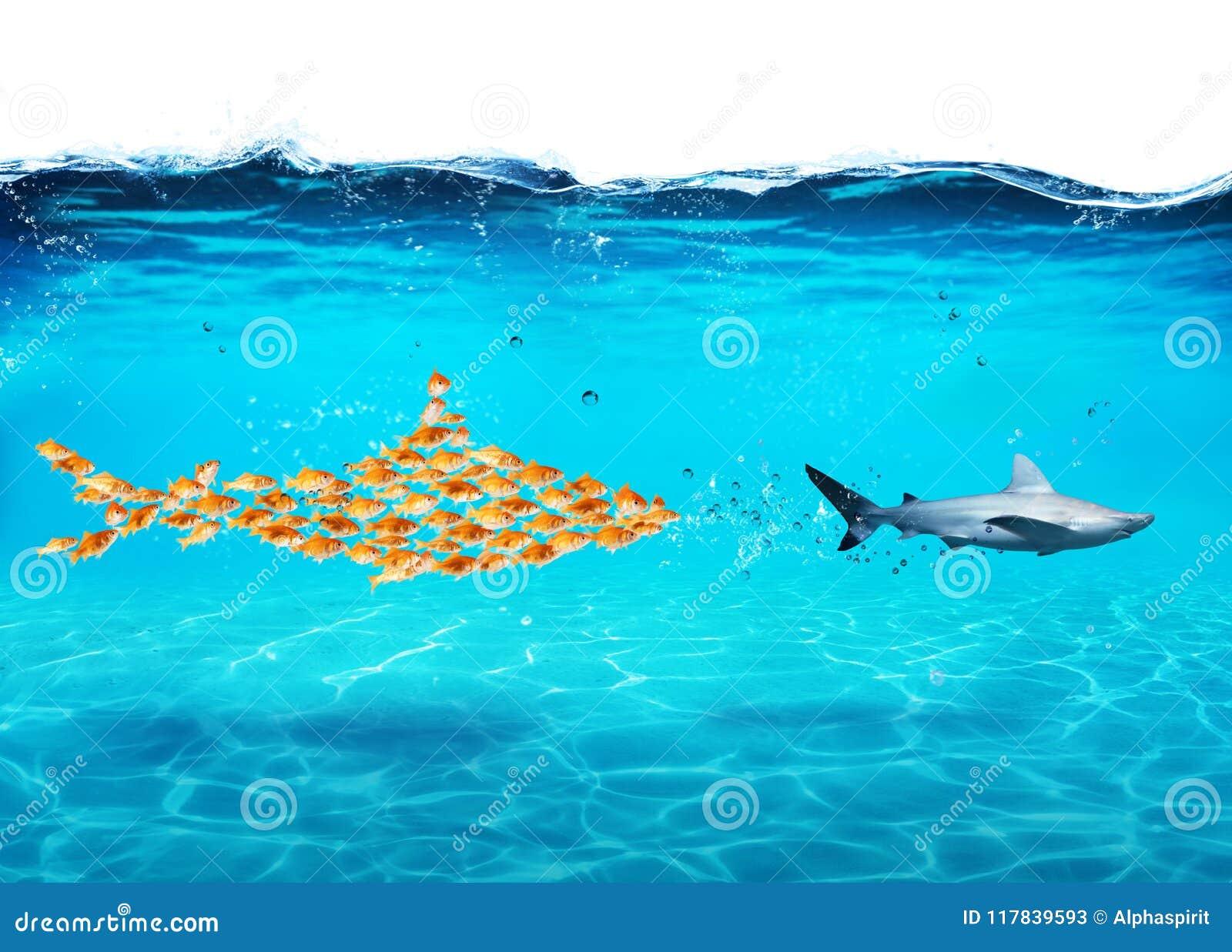Großer Haifisch gemacht vom Goldfischangriff ein wirklicher Haifisch Konzept der Einheit ist Stärke, Teamwork und Partnerschaft