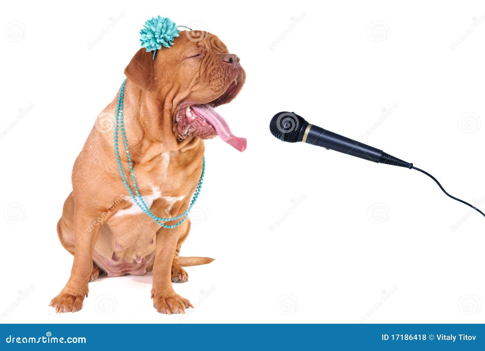 Großer Hund, der heraus Loud singt