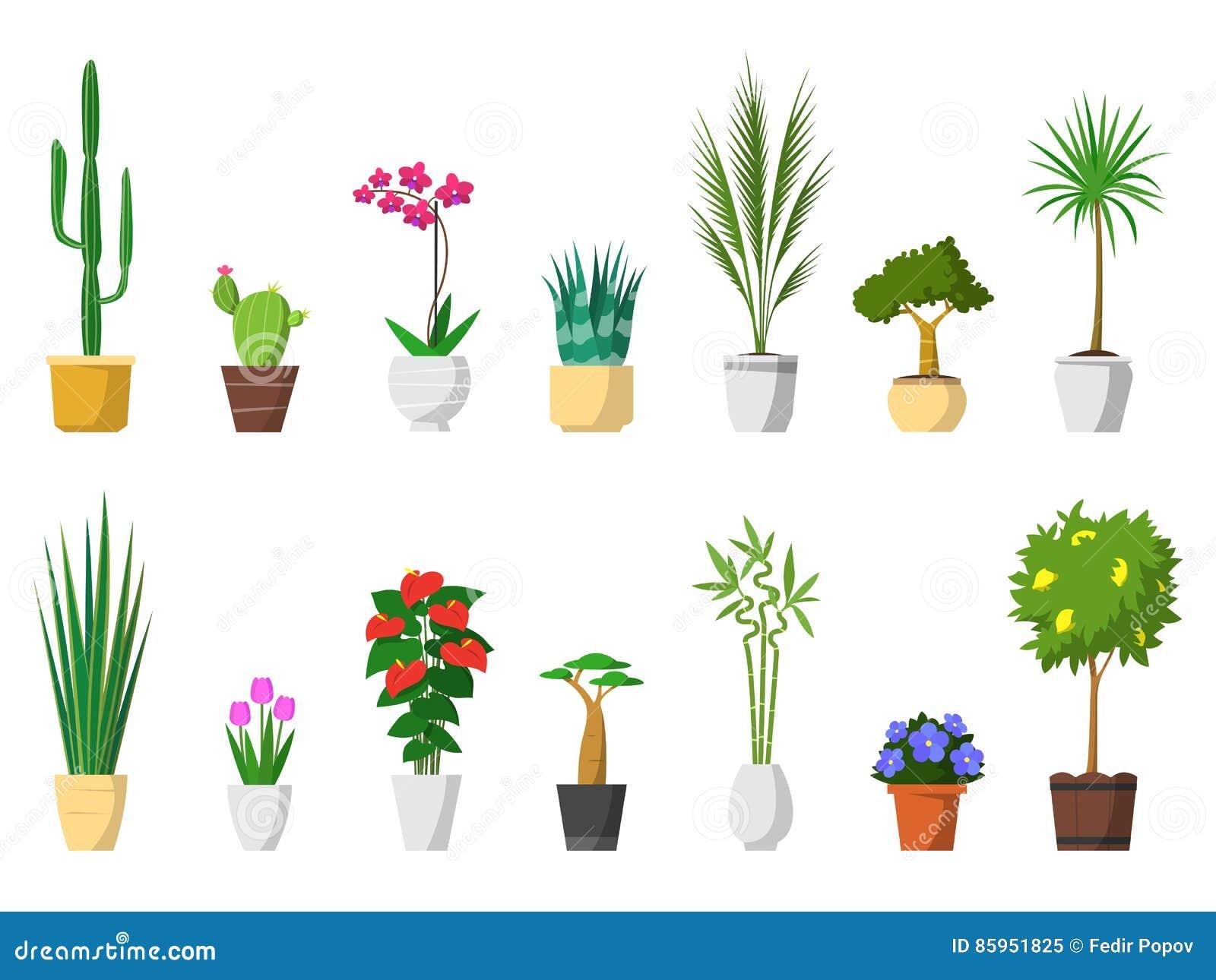 Grosser Satz Dekorative Zimmerpflanzen Mit Dem Topf Lokalisiert Vektor Abbildung Illustration Von Flowerpot Dekoration 85951825