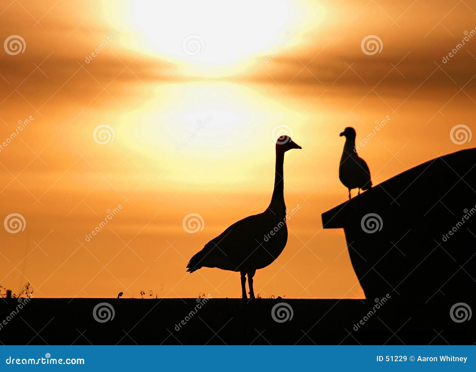 Großer Vogel-kleiner Vogel