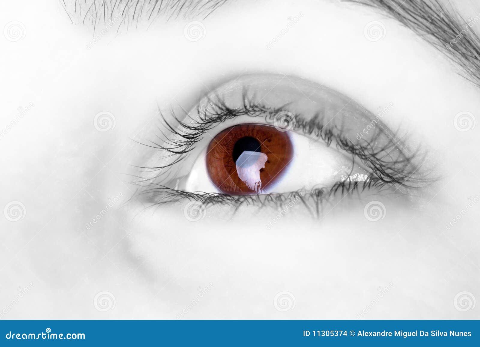 Großes großes braunes Auge
