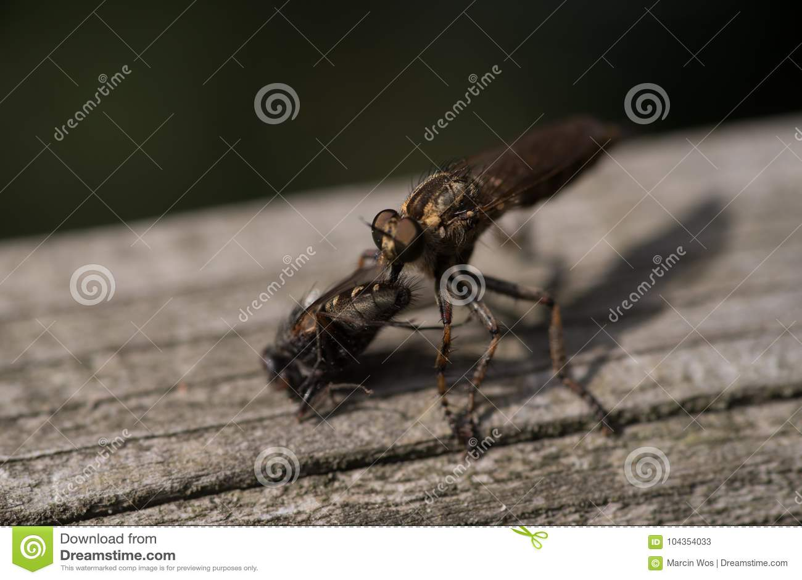 Großes Insekt, das Fliege isst
