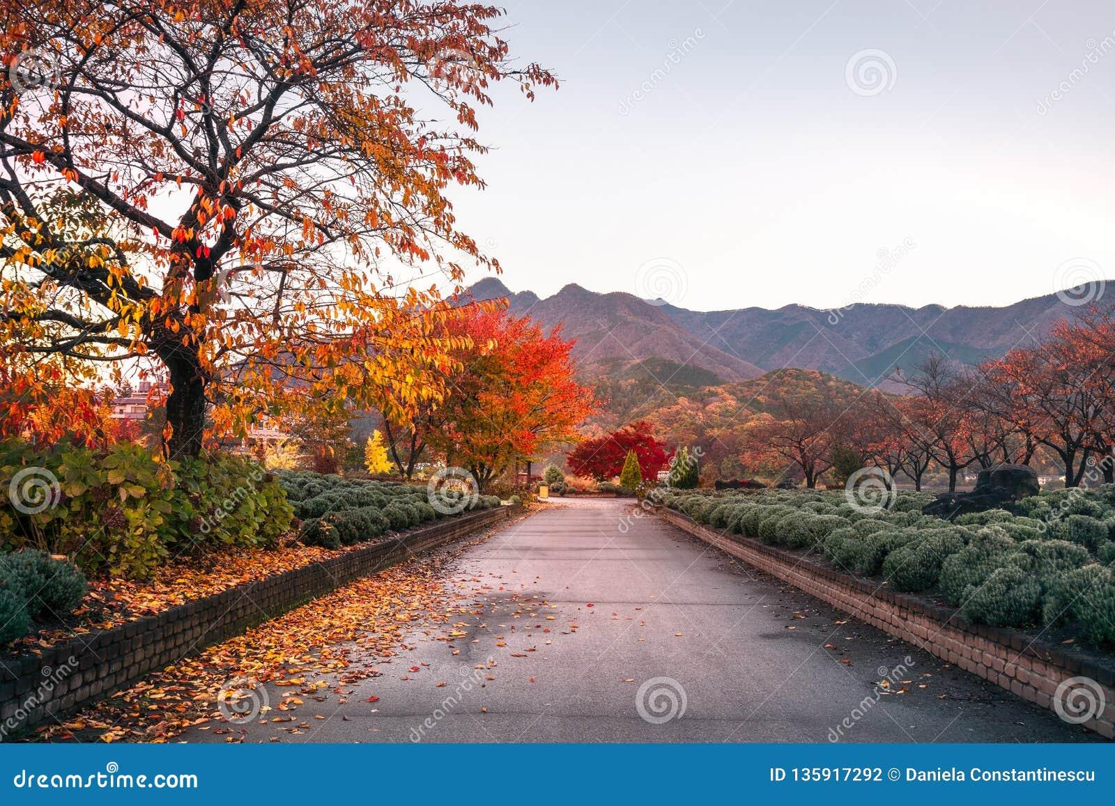 Großartiger Morgen nach Sonnenaufgang auf einem Herbstweg, Japan