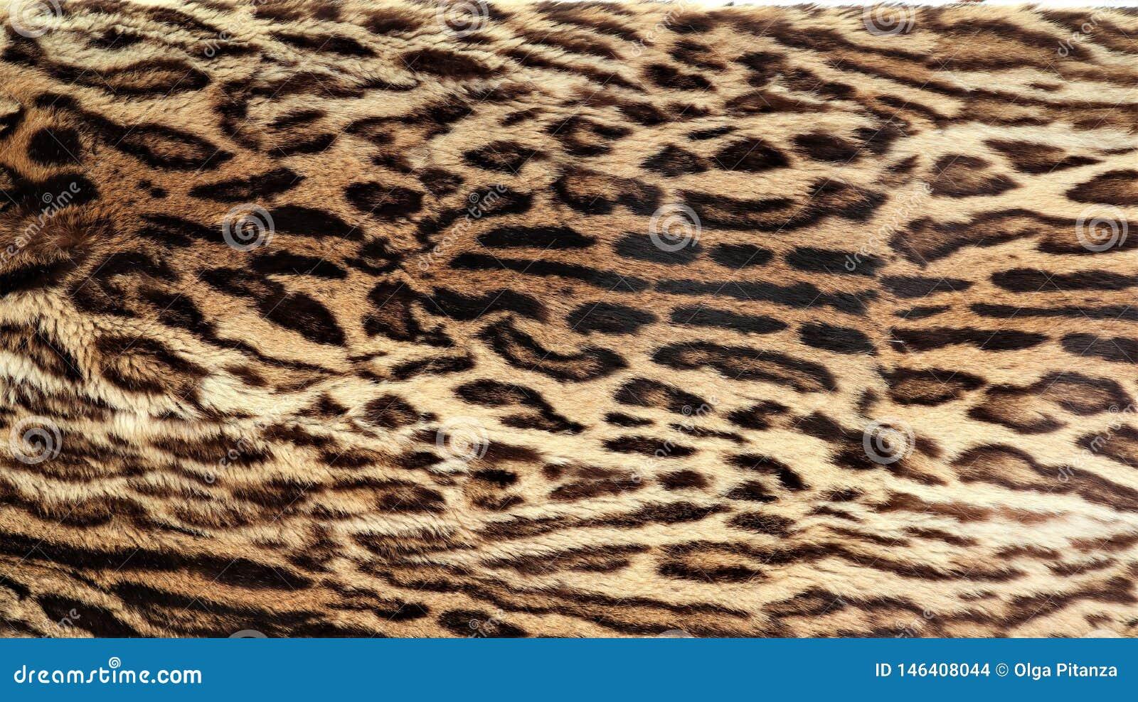 Gro?aufnahme der Haut eines Leoparden