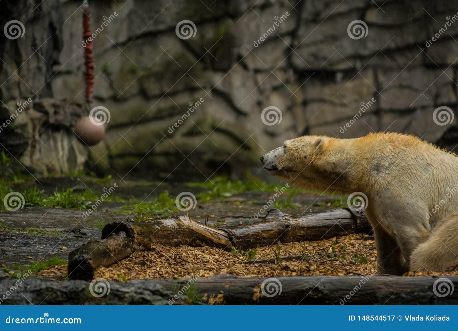 Spiel Eisbär