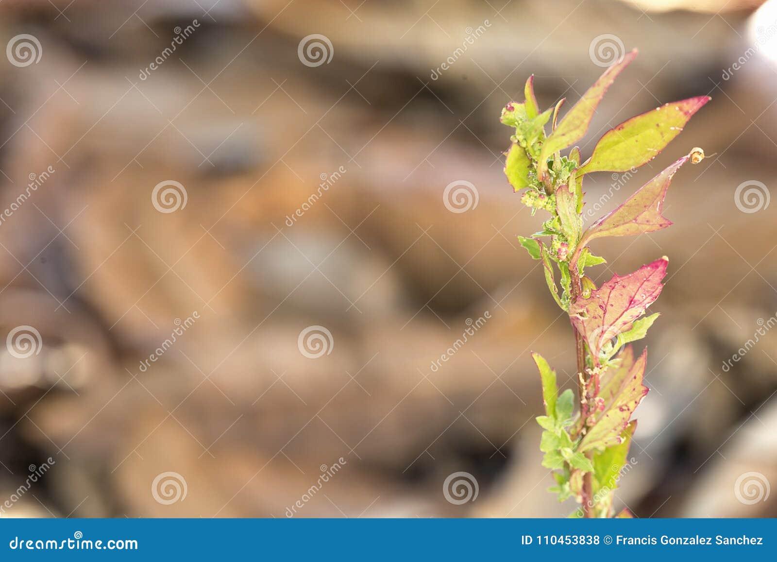 Grodd av en växt bland torra sidor i vinter