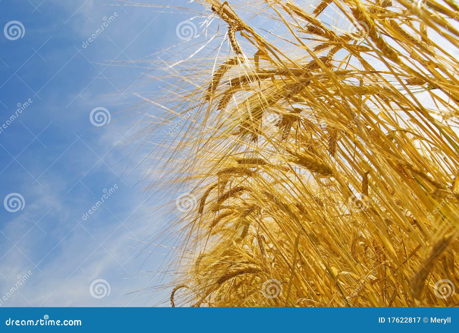 Groeiend korrelgebied, landbouw