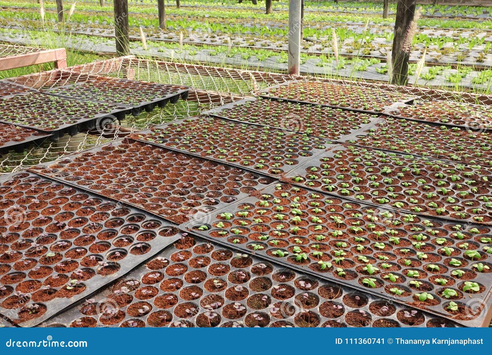 Groeiende Organische plantaardige landbouwbedrijven