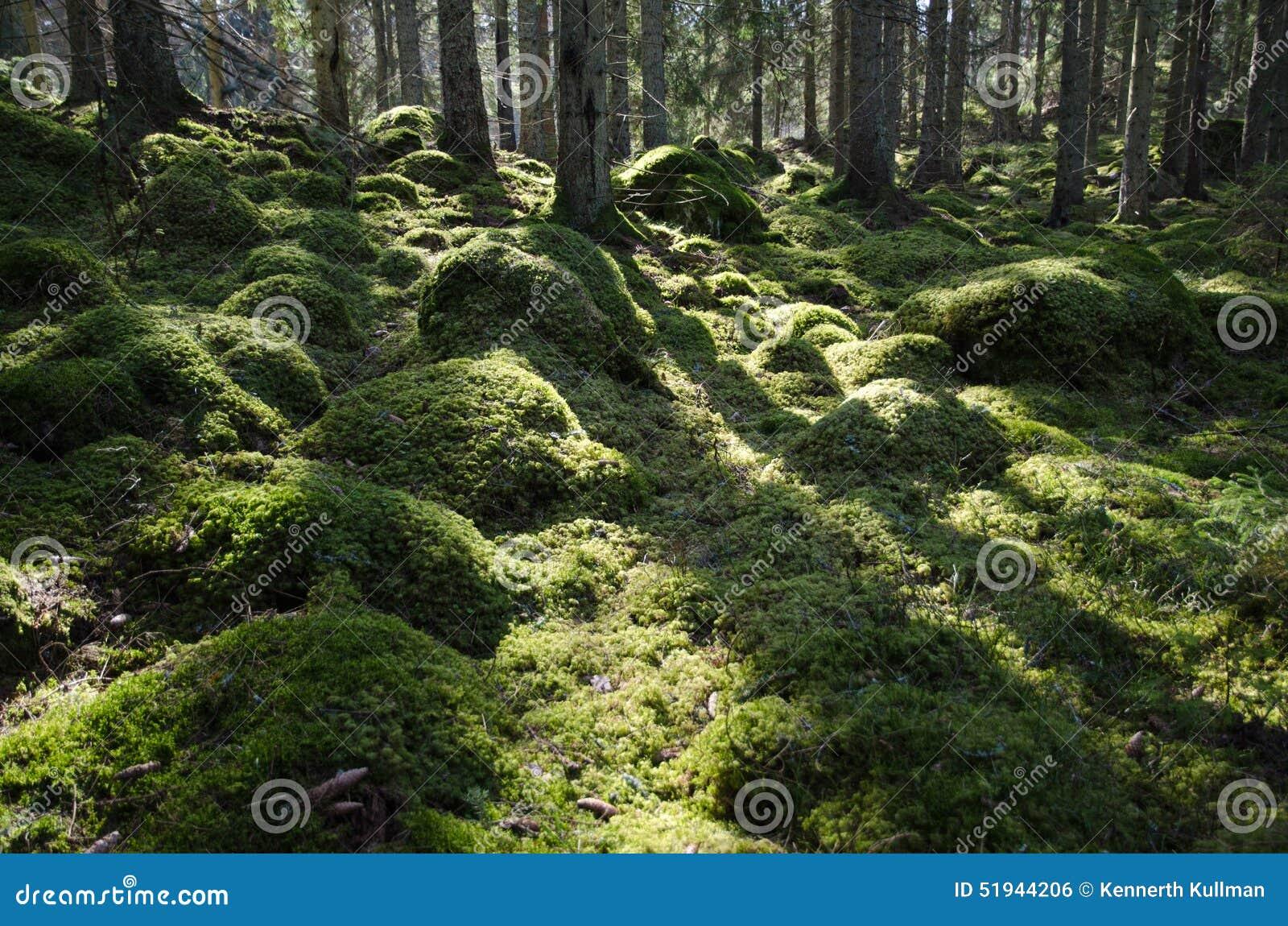 Groen bemost backlit bos