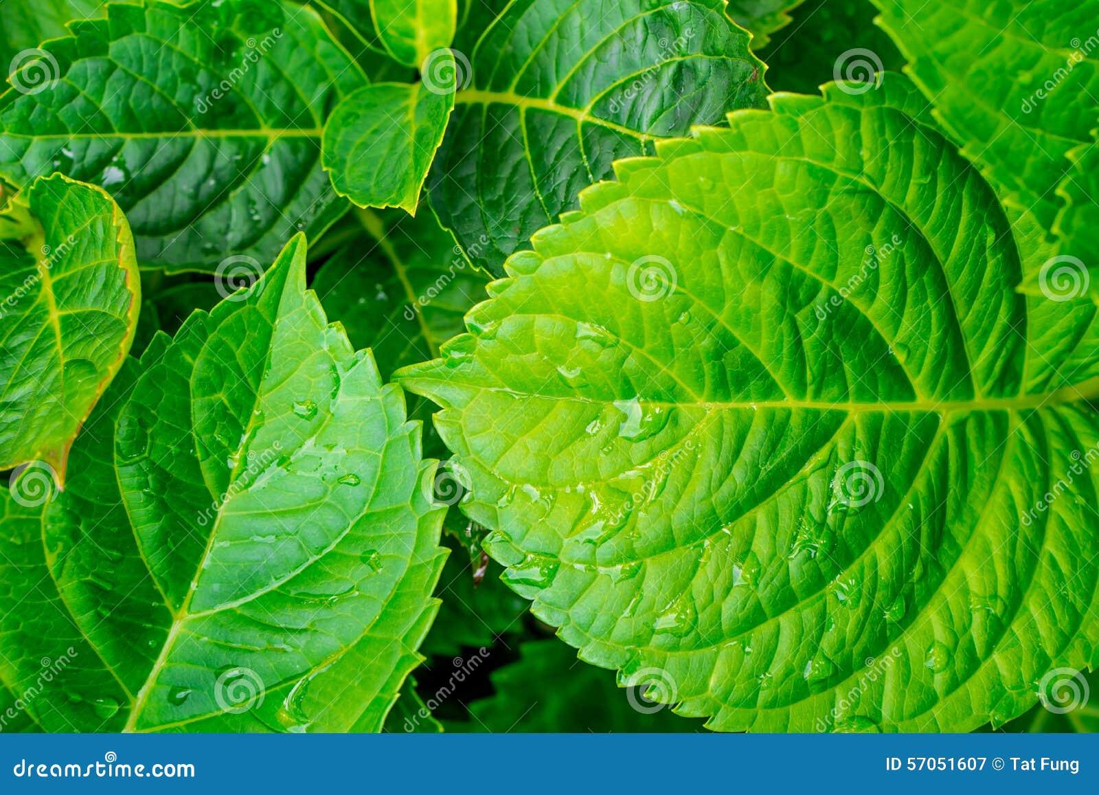 Groen blad