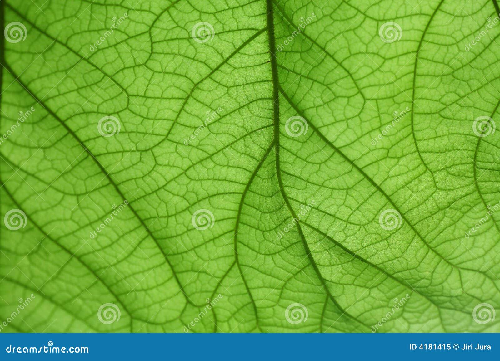 Groen blad als achtergrond