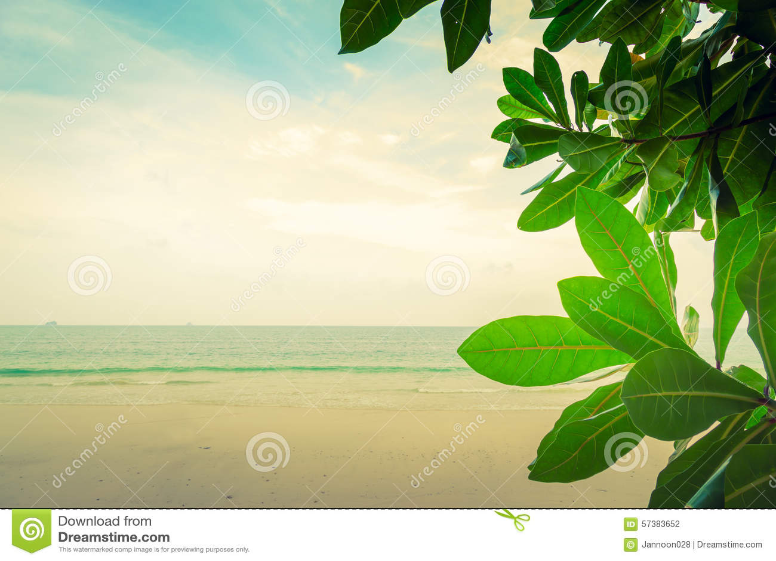 Groen blad (Gefiltreerde beeld verwerkte wijnoogst)