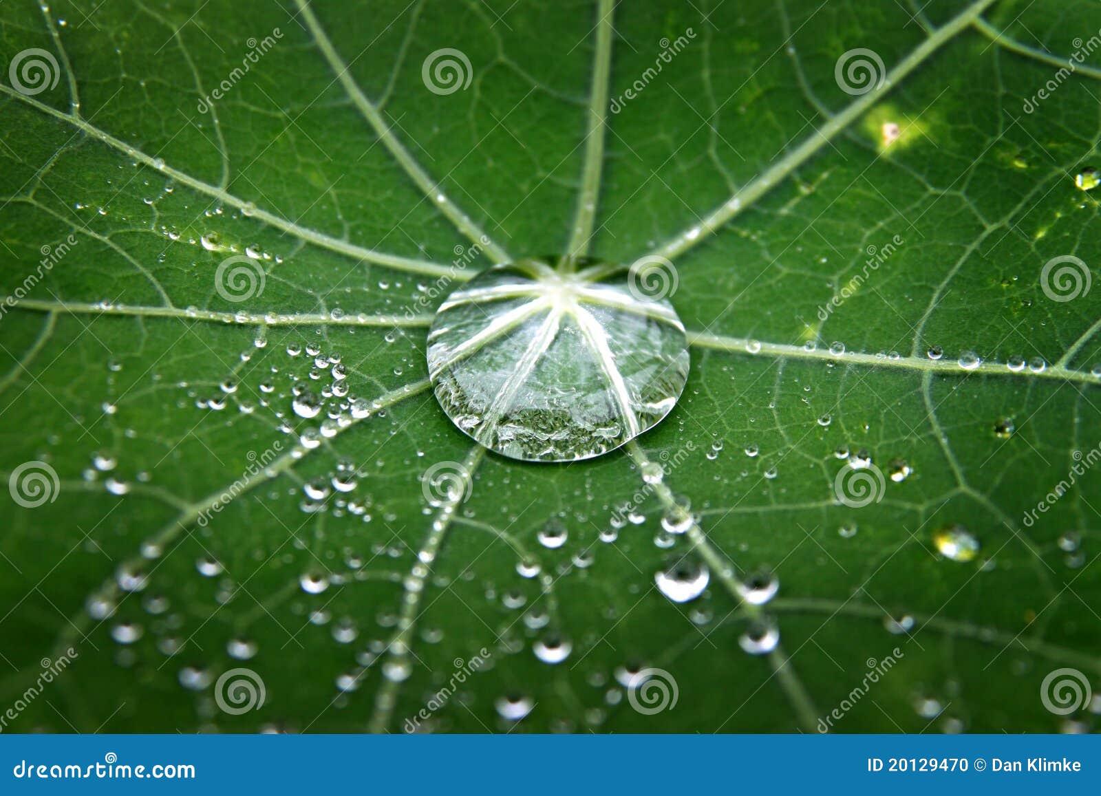 Groen blad met dauw