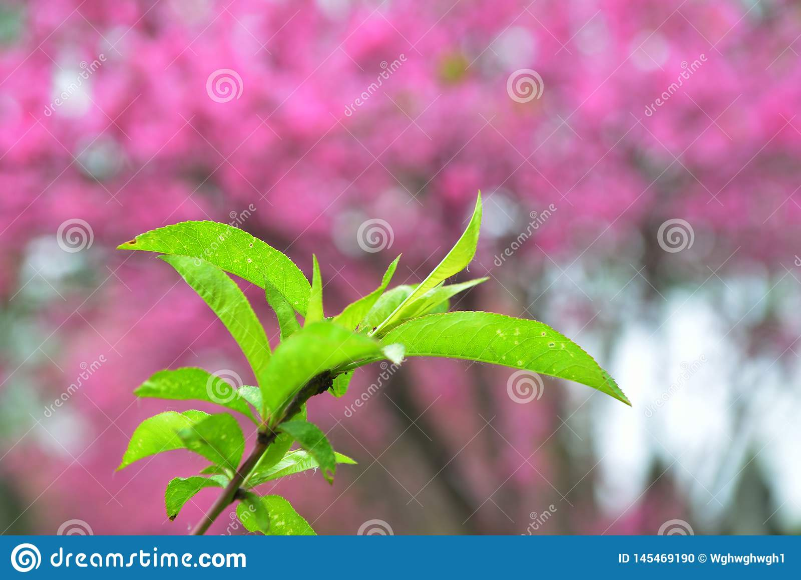 Groen blad tegen rode achtergrond