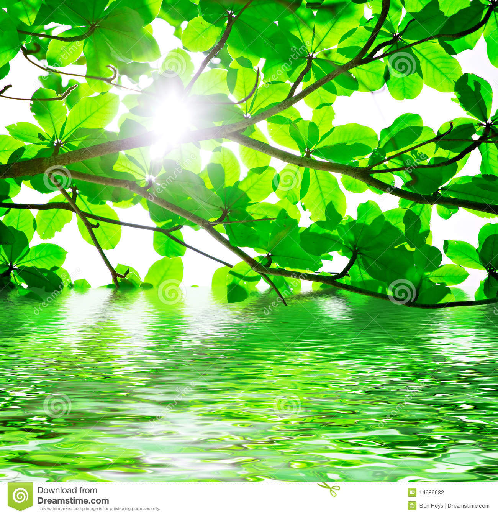Groen bladeren en water stock fotografie beeld 14986032 - Groen behang van het water ...