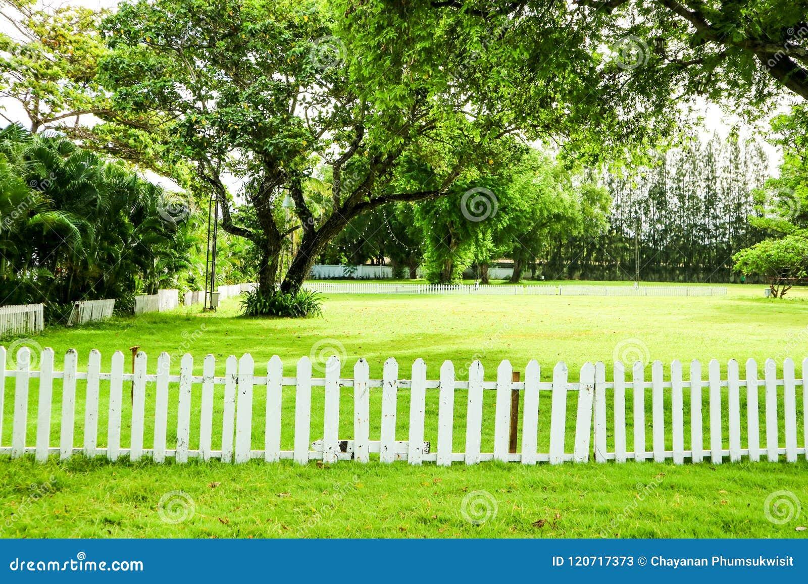 Gras In Tuin : Gras in de tuin tuintuin