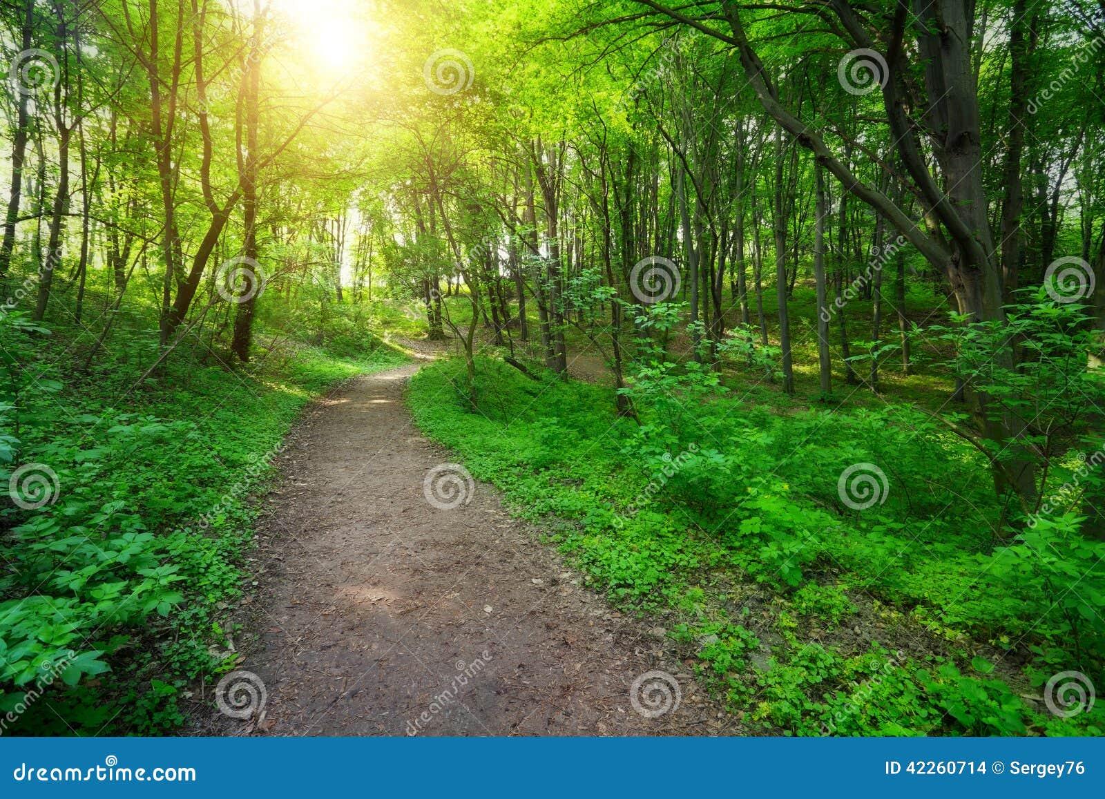 Groen bos met weg en zonlicht