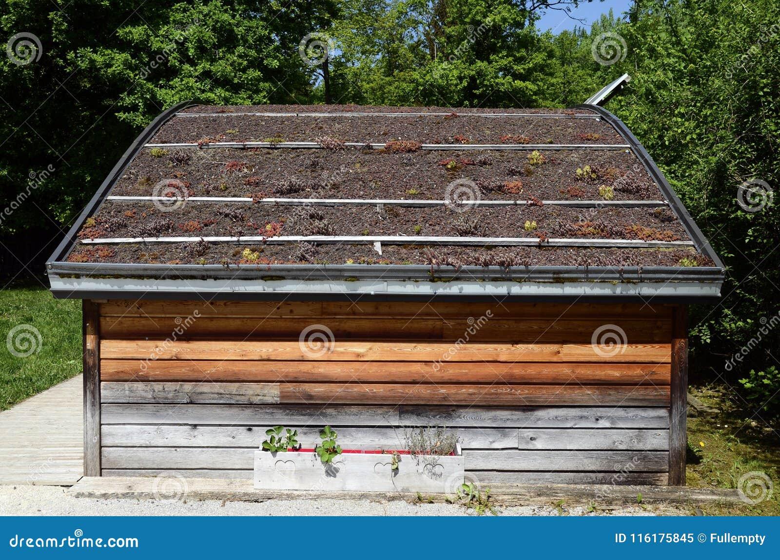 Groen dak met aanplanting op houten chalet