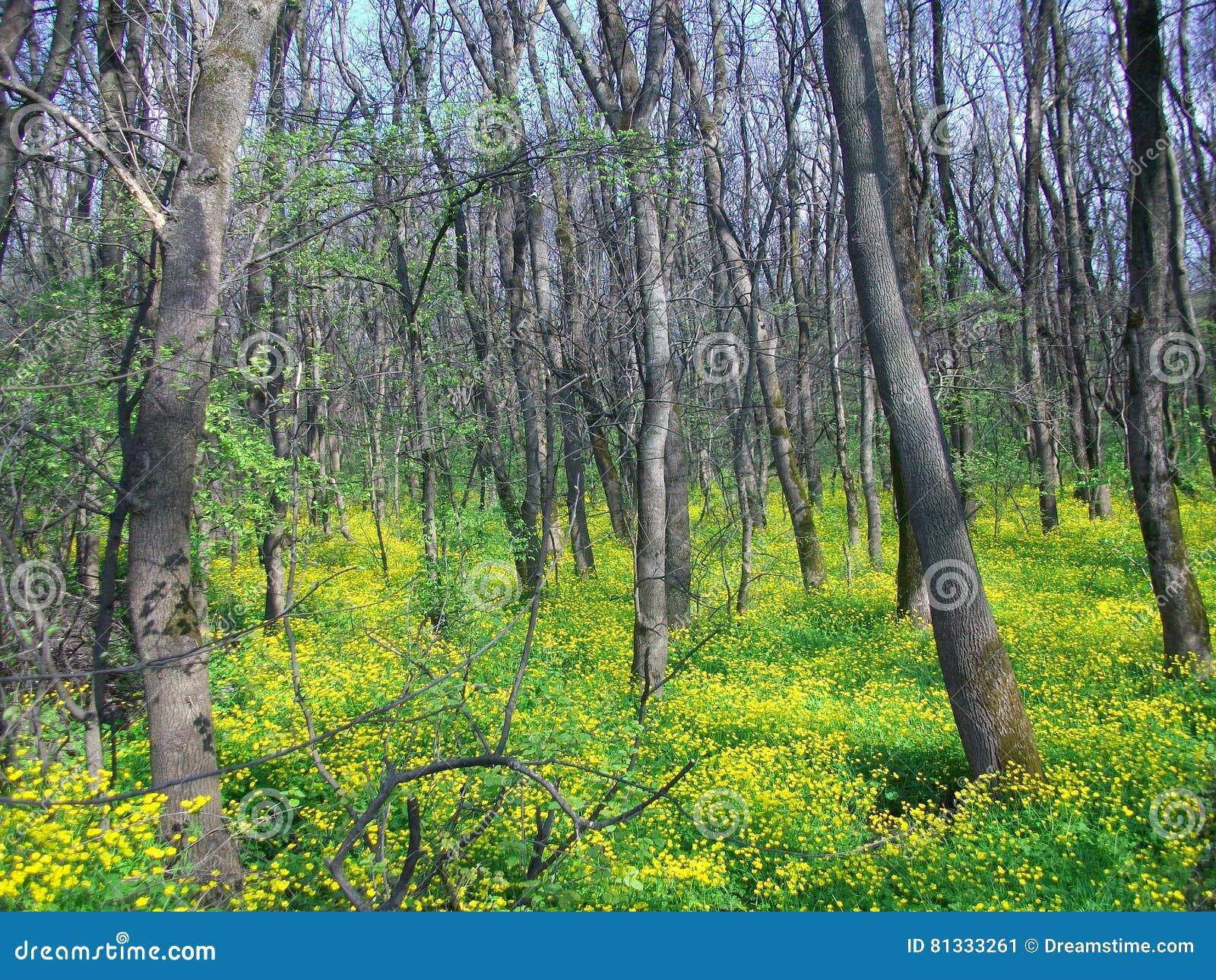 Groen de lentebos in zonstralen