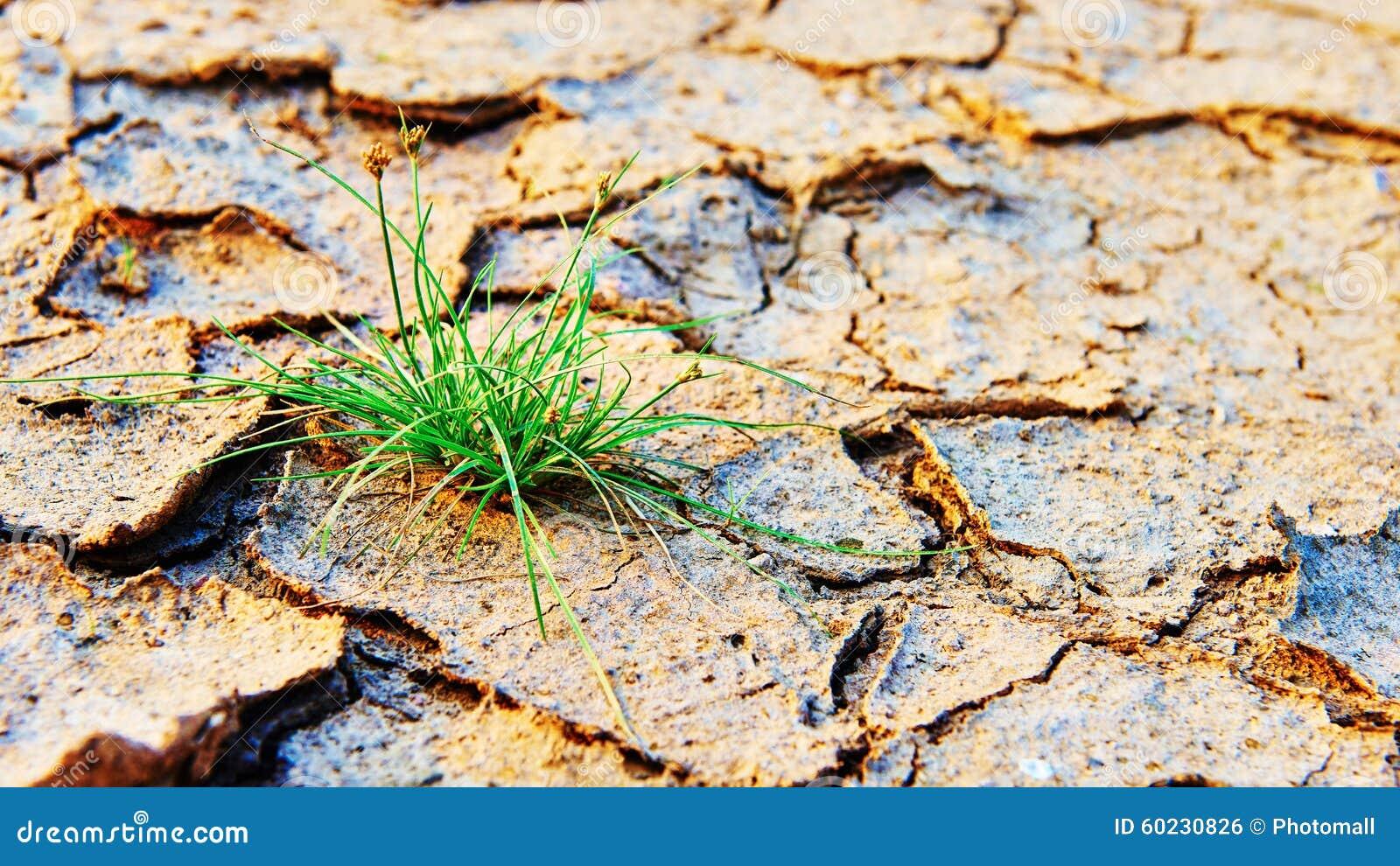 Groen die gras op droog verontreinigingsland wordt gekweekt