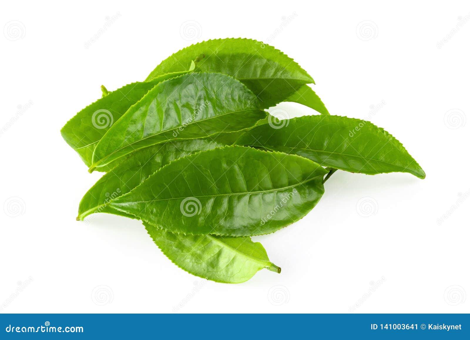 Groen die theeblad over witte achtergrond wordt geïsoleerd