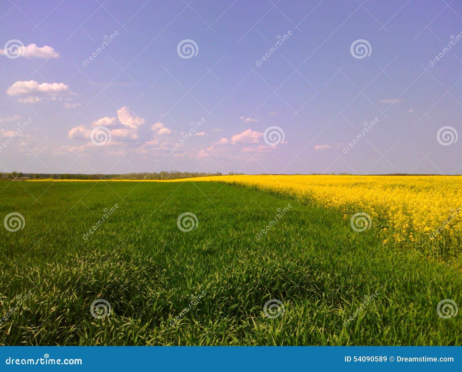 Groen en geel landschap