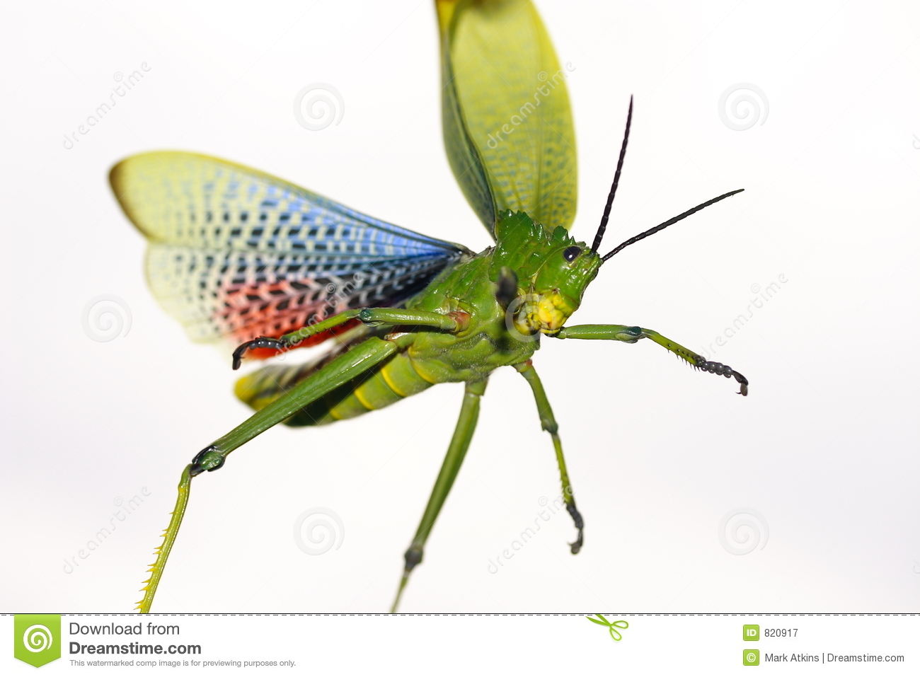 Groen eng insect