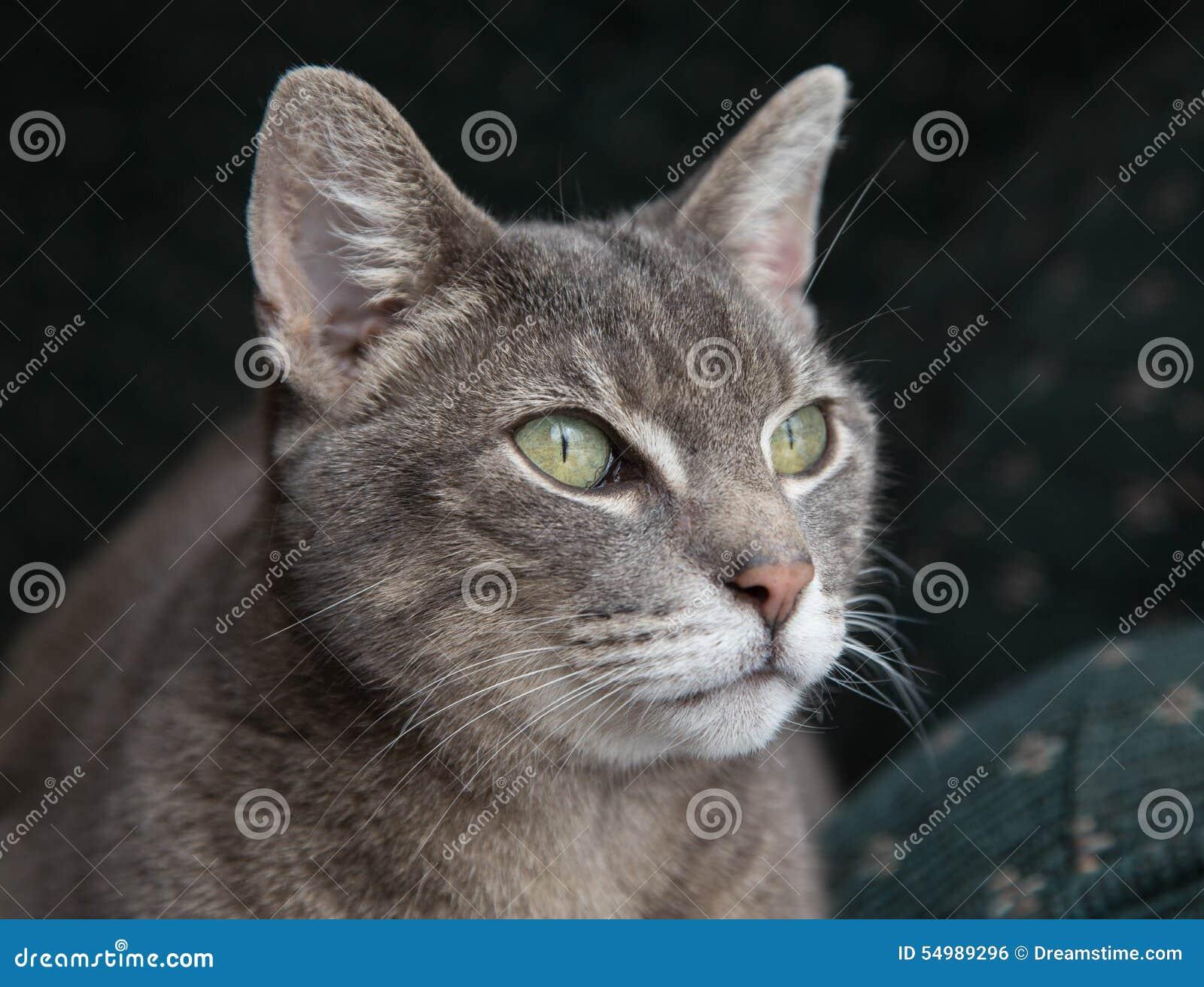 Groen-eyed Kat