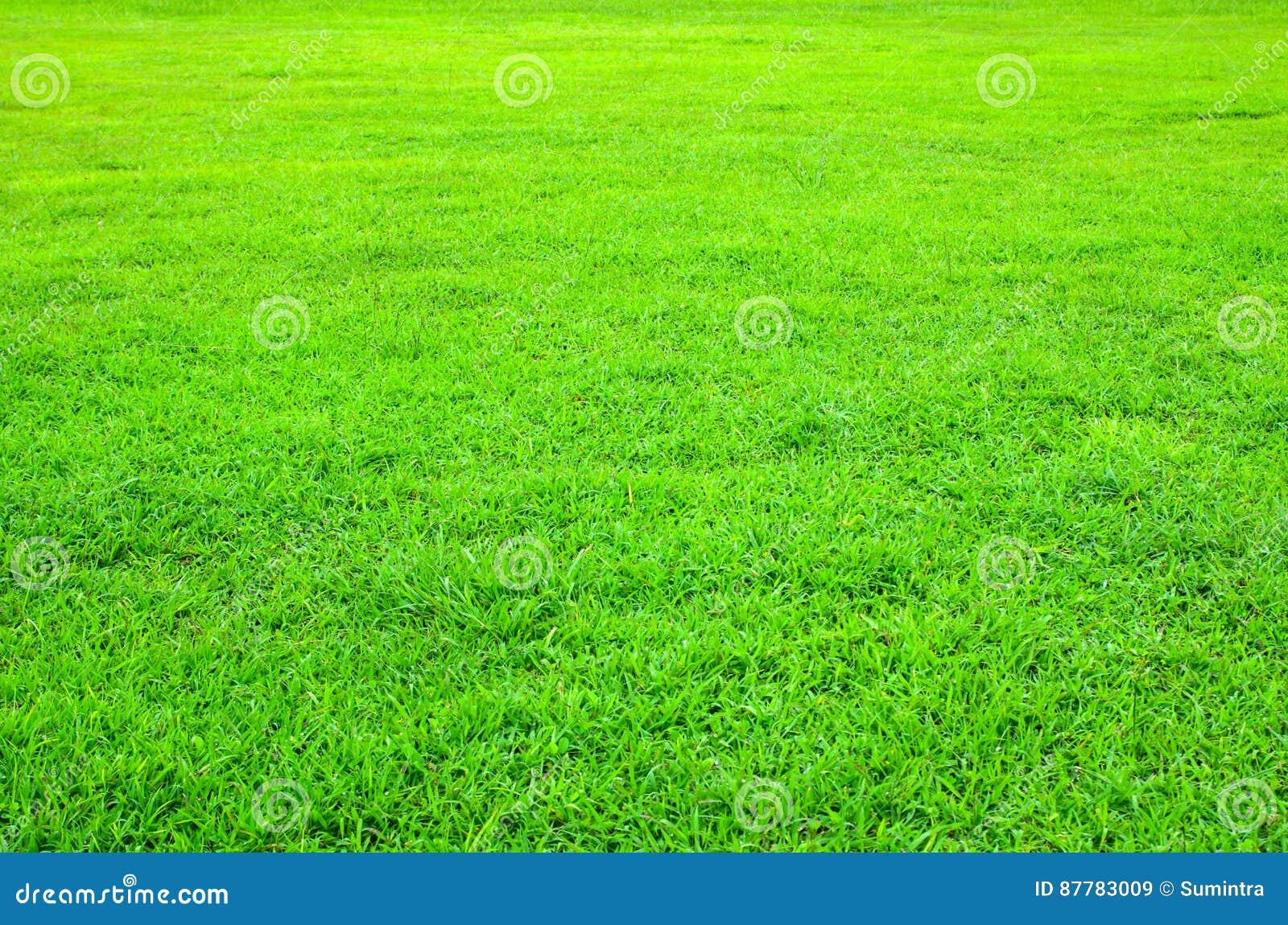 Groen gazon met kort gras voor achtergrond stock afbeelding