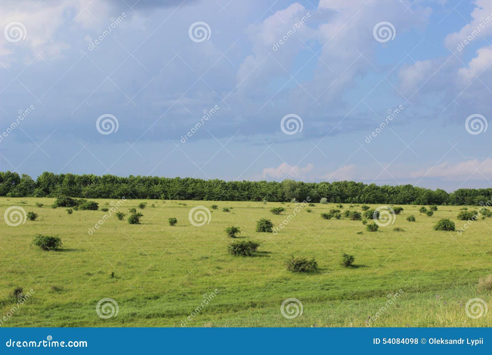 Groen gazon met struiken