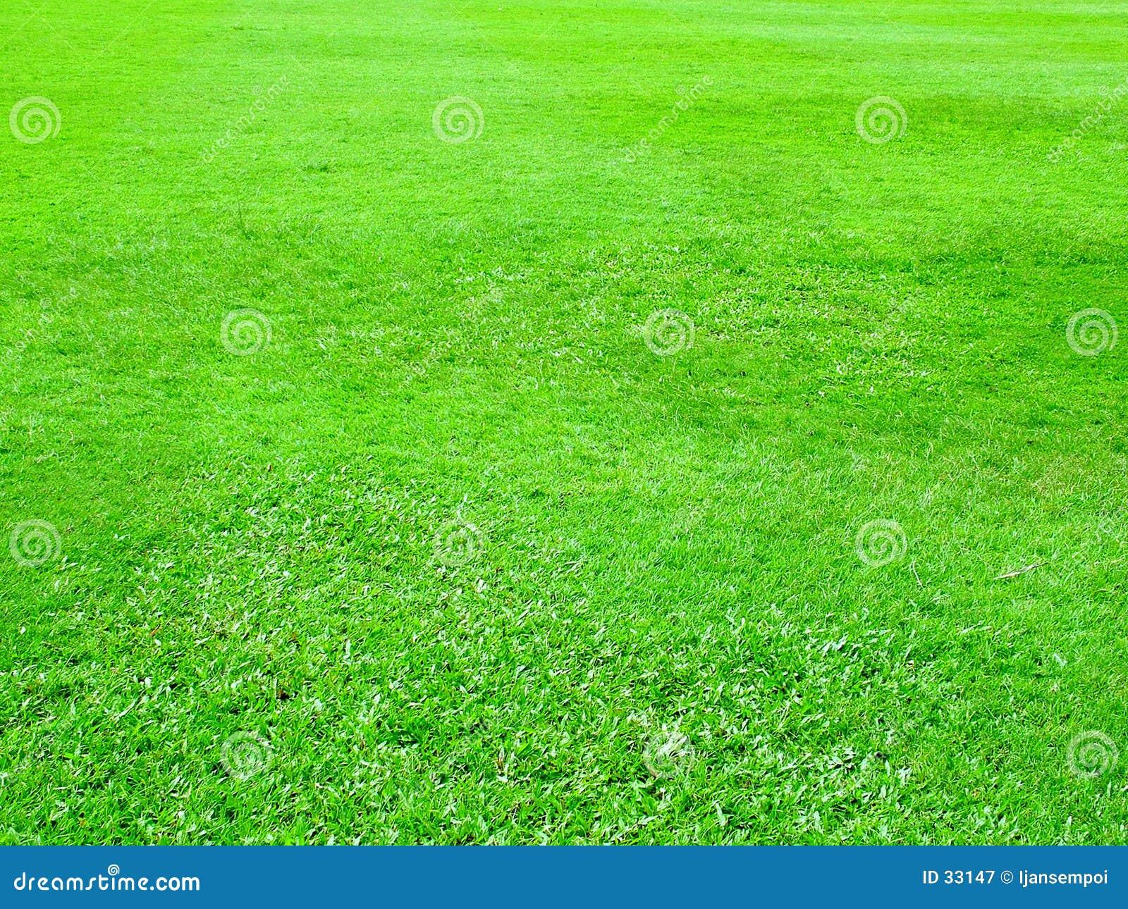 Groen gebied